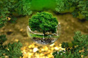 Strom, ekológia, ochrana prostredia