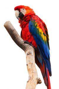 Papagáj zooterapeut